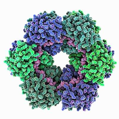 Rift Valley Fever Virus Protein And Rna Art Print by Laguna Design