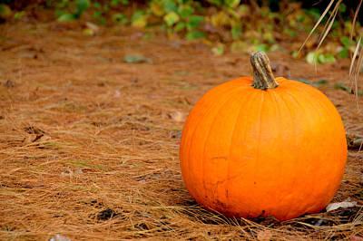 Photograph - Right Pumpkin by Caroline Stella