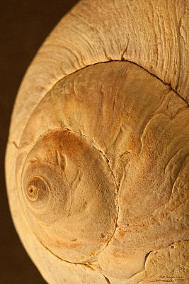 Photograph - Right Shell by WB Johnston