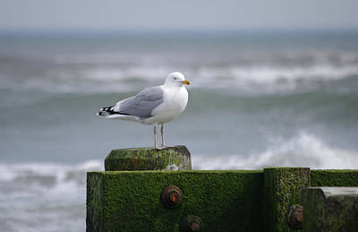 Photograph - Right Tern by Greg Graham