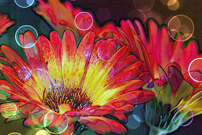 Gerber Daisy Photograph - Righteous Rainbow Blooms by Bill Tiepelman
