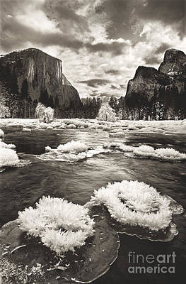 Photograph - Rime Ice On The Merced In Black And White by Dave Welling