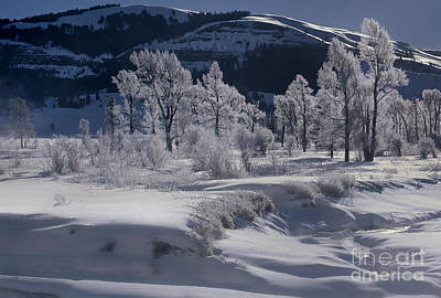 Photograph - Rime Ice On Trees Lamar Valley Yellowstone National Park by Dave Welling