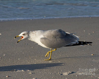 Photograph - Ring-billed Gull by Chris Scroggins