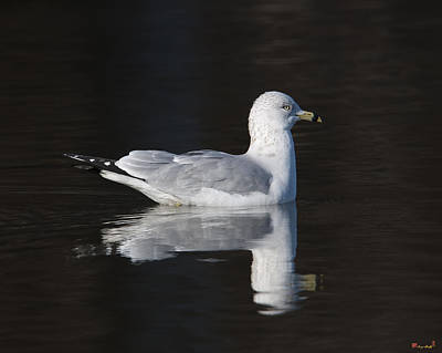 Photograph - Ring-billed Gull Dseab008 by Gerry Gantt