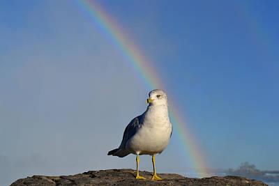 Ring Billed Seagull At Niagara Falls Art Print