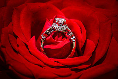 Photograph - Ring In A Rose 1 by Jason Chu
