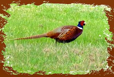 Pheasant Digital Art - Ring-necked Pheasant by Will Borden