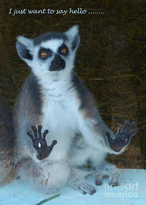 Photograph - Ring Tailed Lemur -greetings by Phil Banks