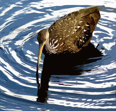 Ringed Limpkin Art Print by Norman Johnson