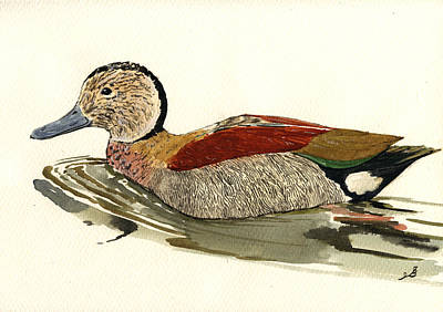 Duck Wall Art - Painting - Ringed Teal by Juan  Bosco