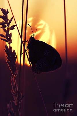 Ringlet Butterfly Sunset Silhouette Art Print