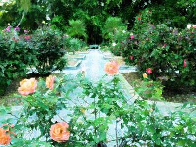 Ringling Rose Garden Original