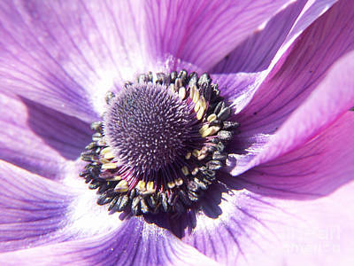 Photograph - Rings Of Purple by Jackie Farnsworth