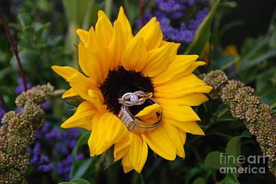 Rings On A Sunflower Art Print by Mark McReynolds