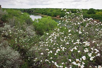 Rio Grande River Photograph - Rio Grande, South Texas by Larry Ditto