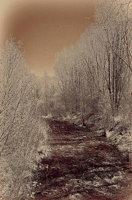 Photograph - Rio Taos Bosque Iv by Charles Muhle