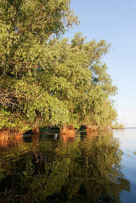 Flooding Photograph - Riparian Forest In The Danube Delta by Martin Zwick