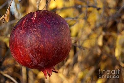 Photograph - Ripe Pomegranate by Kerri Mortenson