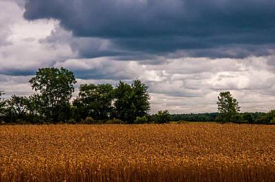 Photograph - Ripe Wheat Field by Gene Sherrill