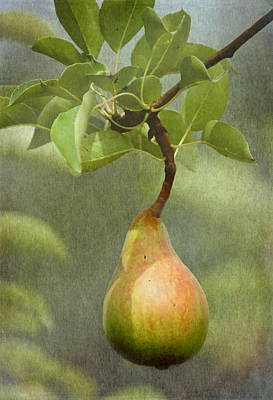 Pear Tree Photograph - Ripening Pear by Angie Vogel