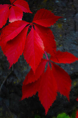 Photograph - Ripple Red by Randi Grace Nilsberg