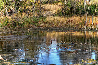 Photograph - Ripples On A Pond by Richard Gregurich