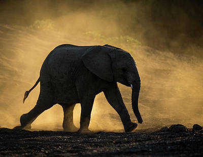 Baby Elephant Wall Art - Photograph - Rising Dust by Jaco Marx