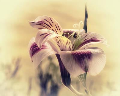 Peruvian Lily Photograph - Rising Sun by Darlene Kwiatkowski