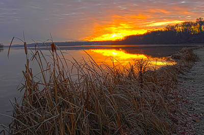 Art Print featuring the photograph Rising Sunlights Up Shore Line Of Cattails by Randall Branham