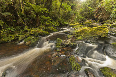 Photograph - River At Mcleans Falls After Rains by Colin Monteath