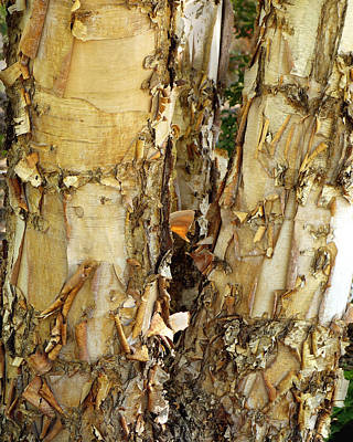 Photograph - River Birch Bark - Photography by Ann Powell