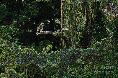 River Bird Of Prey Art Print