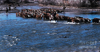 Cattle Drive Photograph - River Crossing by Jerry McElroy
