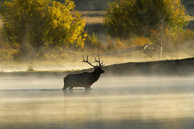 Photograph - River Crossing - Elk by Shari Sommerfeld