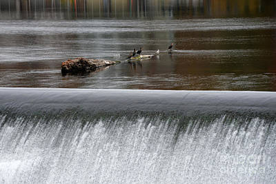 Williams Dam Photograph - River Dam by Mark Ayzenberg