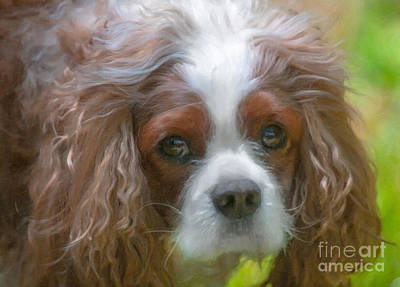 Photograph - River Dog by Dale Powell