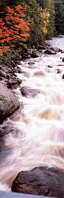 White River Scene Photograph - River Flowing Through A Forest, Ausable by Panoramic Images