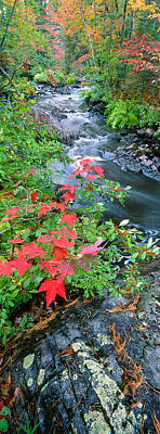 Black River Photograph - River Flowing Through A Forest, Black by Panoramic Images