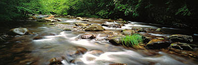 River Flowing Through A Forest, Little Art Print
