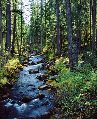 River Flowing Through A Forest, South Art Print