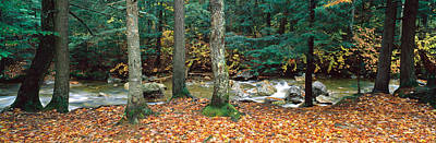Fallen Leaf Photograph - River Flowing Through A Forest, White by Panoramic Images