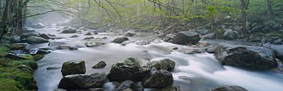 River Flowing Through The Forest Art Print