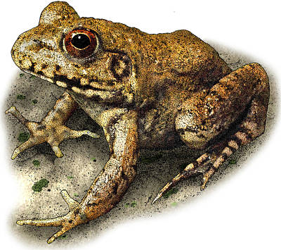 Photograph - River Frog by Roger Hall