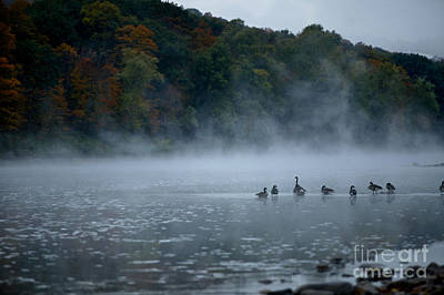 Photograph - River Geese by Nicki McManus