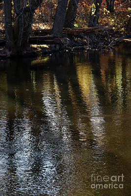 Photograph - River Gold by Linda Shafer