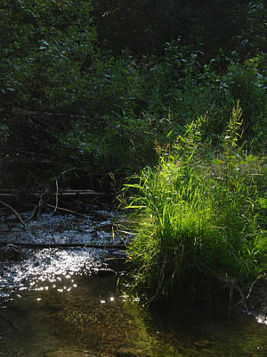 Photograph - River Grass by Jacqueline  DiAnne Wasson