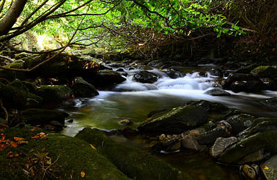Photograph - River In Killarney National Park by Barbara Walsh