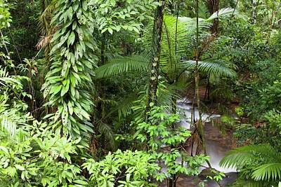 River In The Daintree Rainforest Art Print by Ashley Cooper