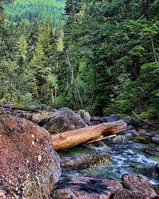 Photograph - River In The Woods by John Bushnell